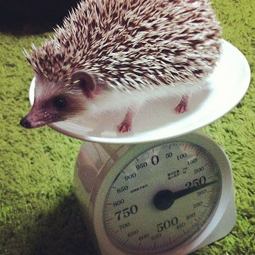 Right. That's me, weighing myself. In grams and kilos. Photo by senov.
