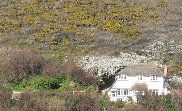 North Cornwall. Thatched cottage.