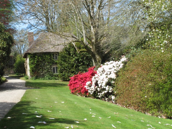 Lanhydrock House, Cornwall, rhododendron, azaleas
