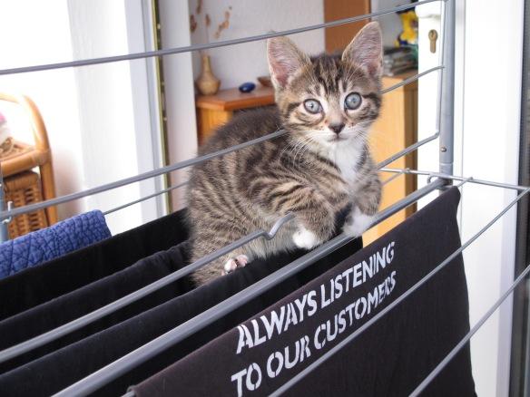 cut kitten picture