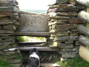 A stile. With a dog.