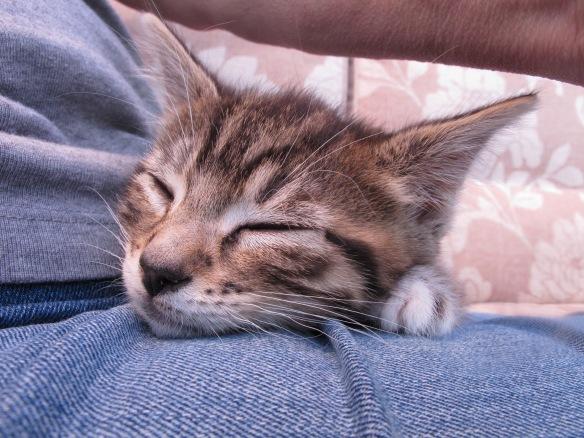 Fast Eddie, fast asleep