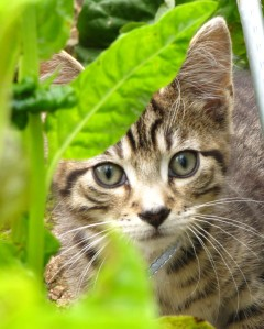 Stalking in the spinach.