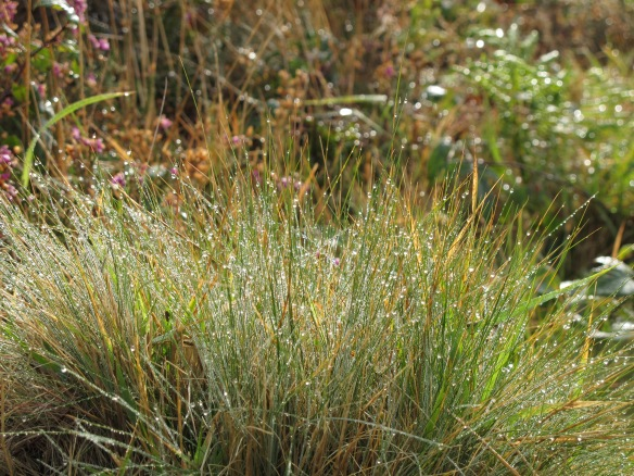 Beyond irrelevant photo: grasses after an autumn rain
