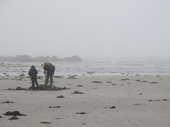 A rare relevant photo: digging clams on a foggy day. Marazion.