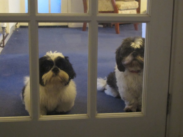 Irrelevant Photo: Sometimes I feel like I'm being watched. That's Moose on the left and Minnie the Moocher on the right. And no, they can't come in.