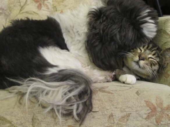 Irrelevant photo: Minnie the Moocher and Fast Eddie, in a moment of bliss.