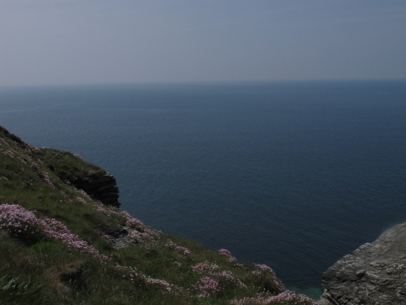 Irrelevant photo: thrift growing on the cliffs.