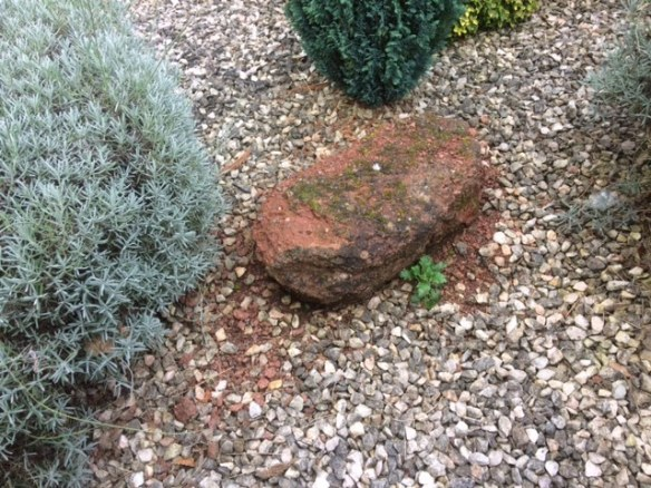 Bonus relevant photo: A single stone, carefully placed in the same yard, which I'd call a garden if I weren't, at heart, American. Our best guess is that that the wall was hit when Exeter was bombed during World War II.