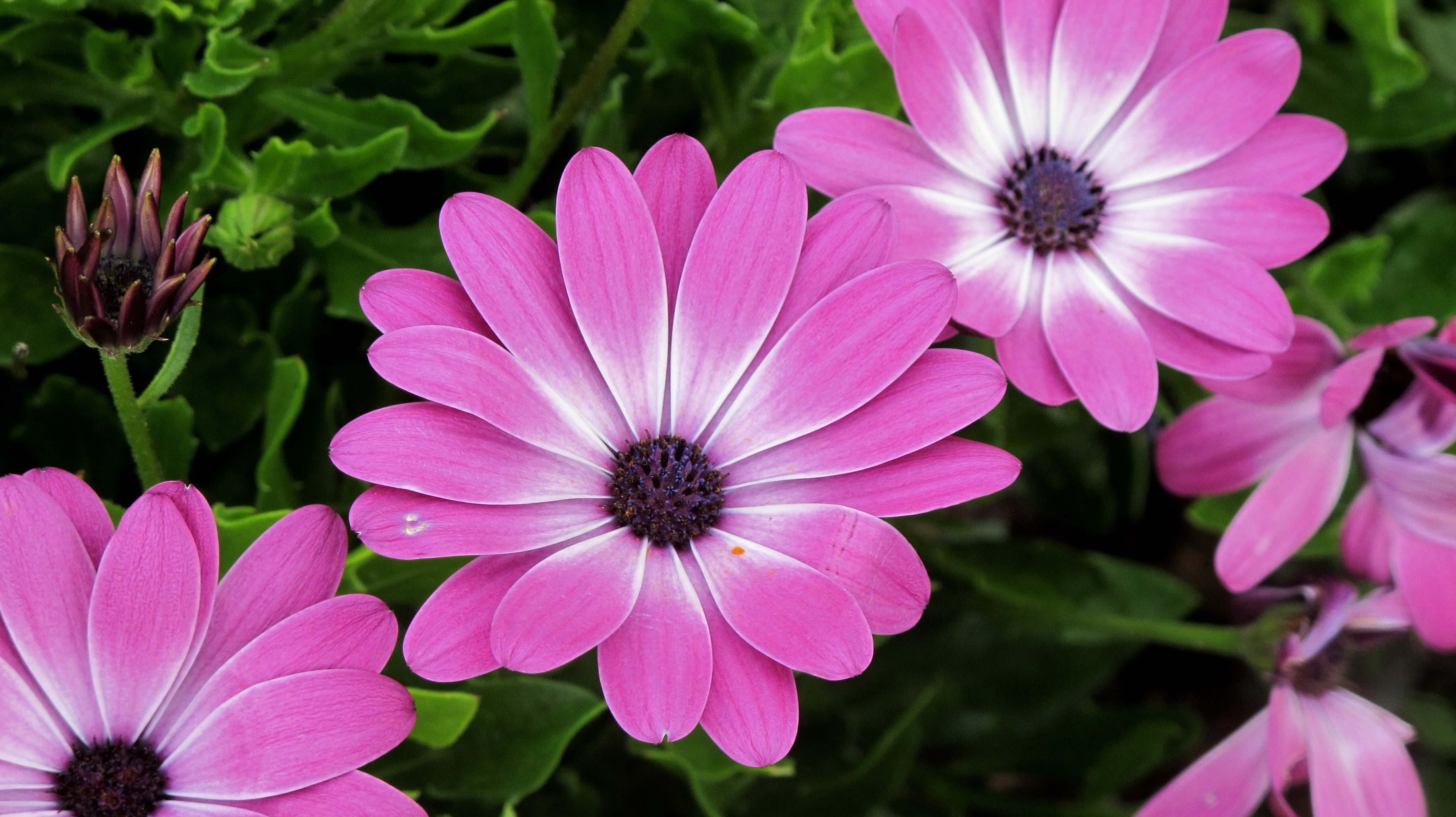British manners notes from the uk these are whatsit flowers in bloom in our yard theyre wonderful the slugs dont eat them izmirmasajfo